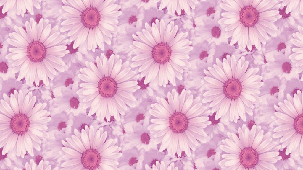 Best HD Wallpapers for Laptop 1080p with Daisy Flower Images