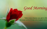 Good Morning Images with Red Rose Flower and Quotes