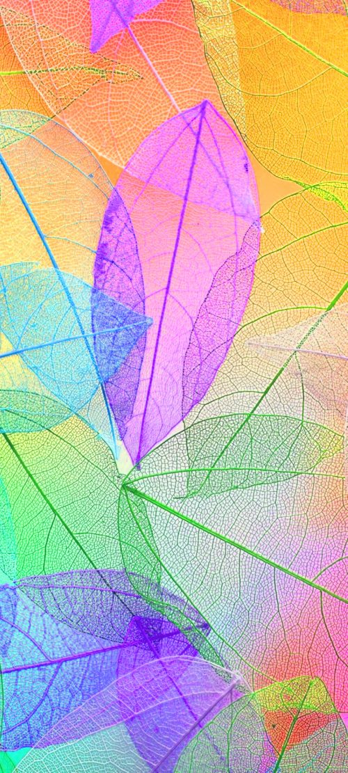 10 Best Pins on Pinterest for Your Samsung A Quantum - #10 - Transparent Colorful Leaves