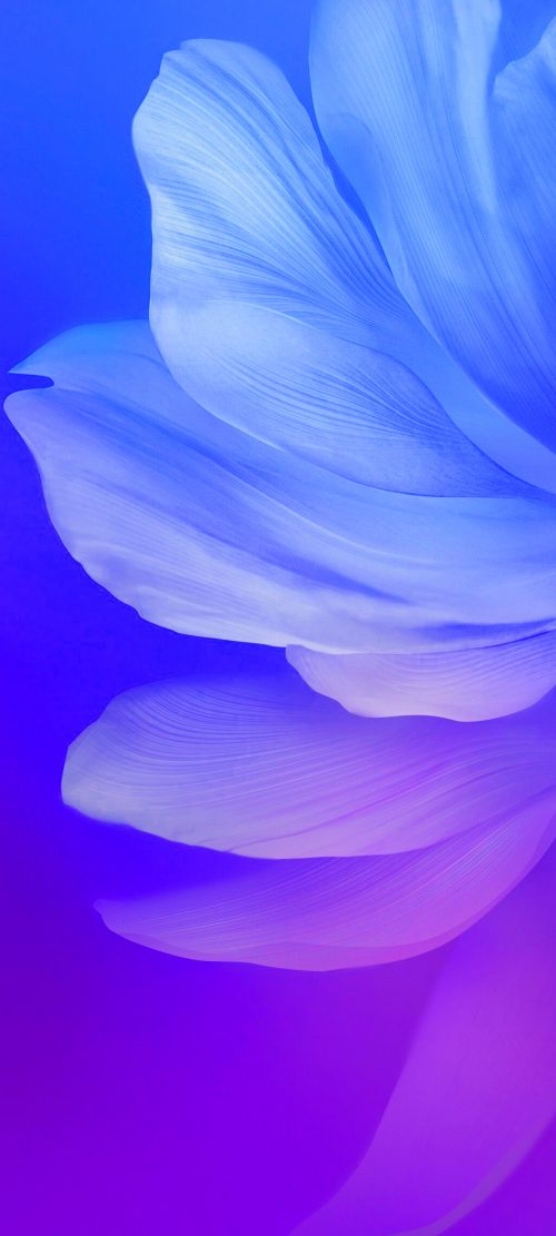 Cool Alternative Wallpaper for Samsung Galaxy S21 Ultra 5G with Flower Petals