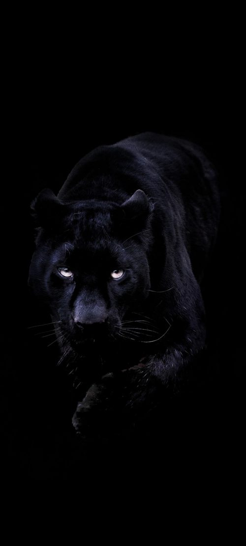 Dark Wallpaper for Smartphone with Picture of Black Panther