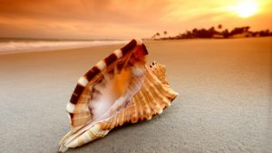 Nature Wallpapers for Desktop Background with Macro Photo of Seashell